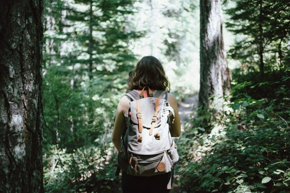 Tur i skoven