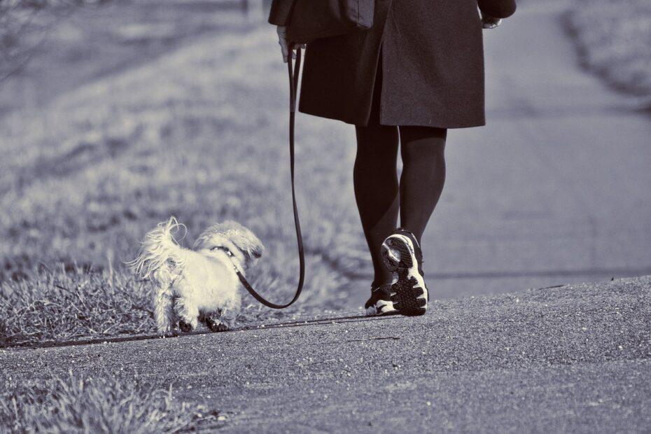 Kvinde lufter lille hund
